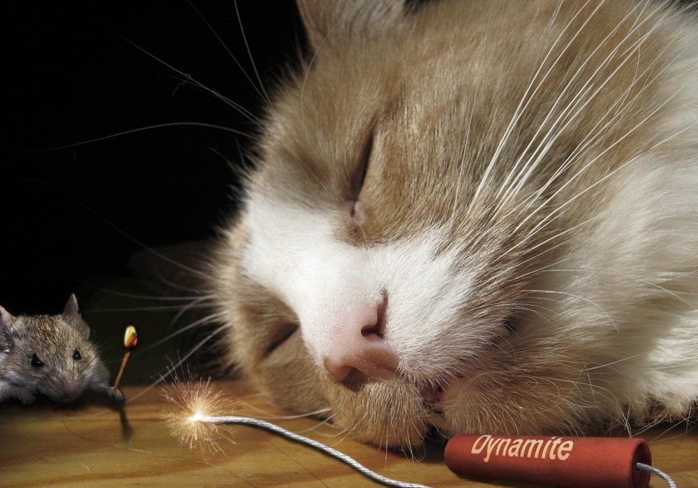 Субботнее, мышь и кот смешные картинки